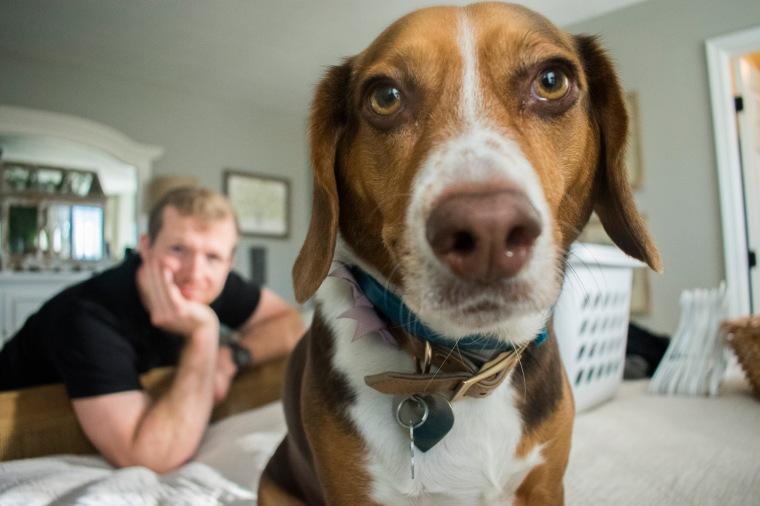 Beagles January 2018_5.JPG