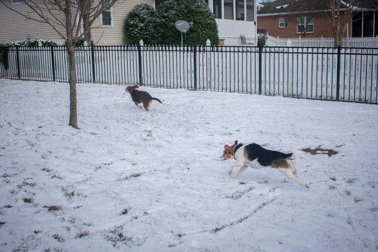 Snow Day_23.JPG